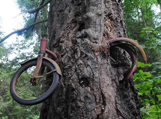 Madesimo Bike